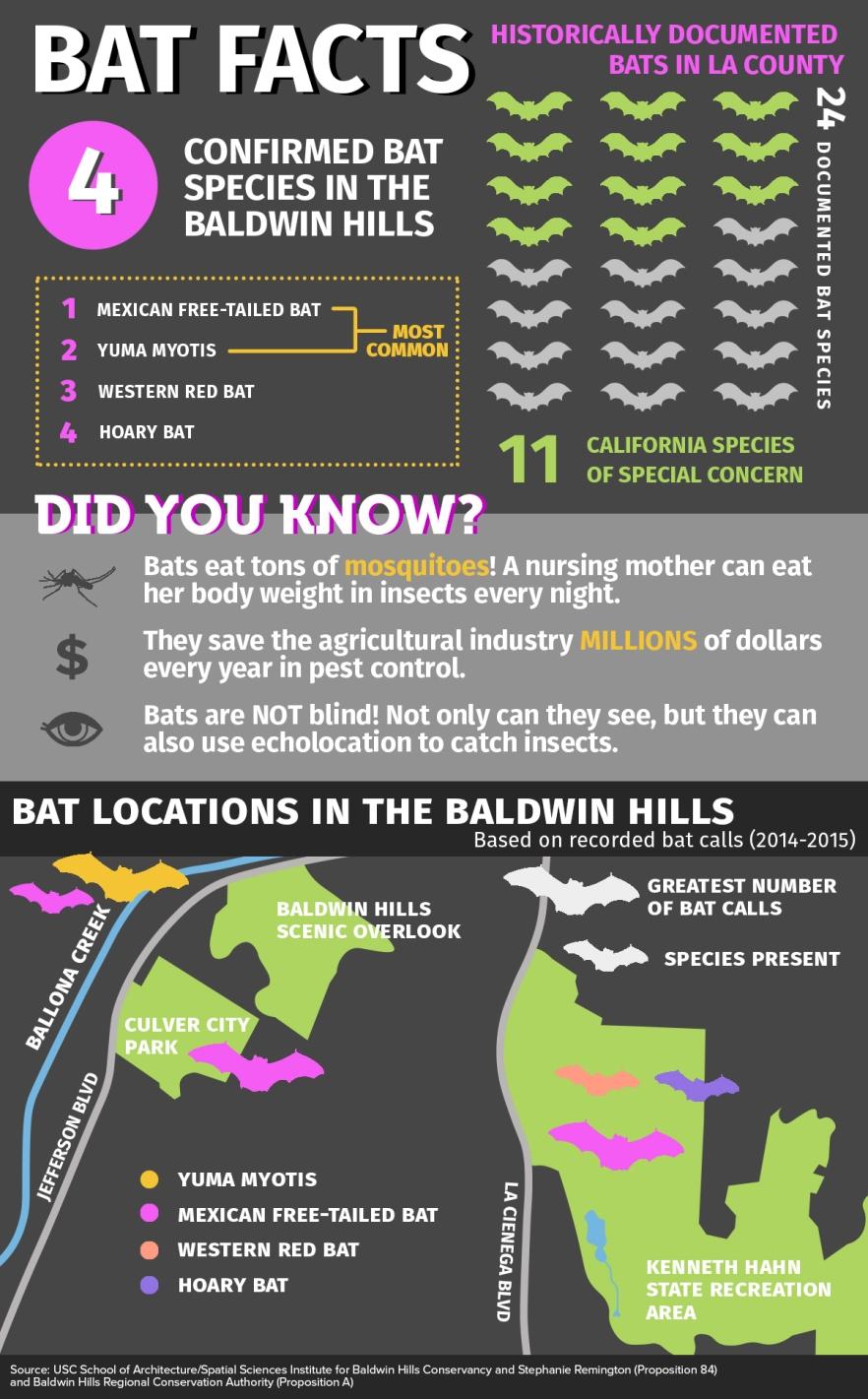 Bat Infographic 8.17