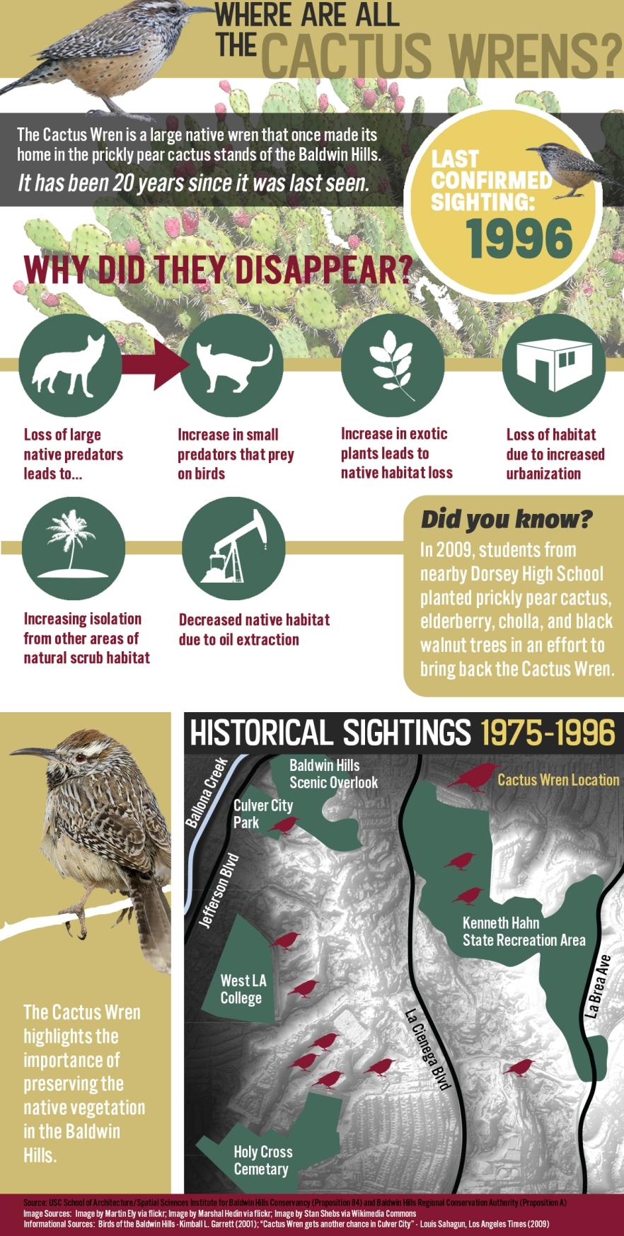 Cactus Wren Infographic 8.17