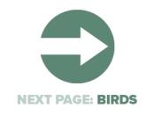 Next Page Birds