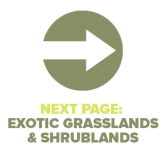 Next Page Exotic Grass and Shrub