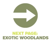 Next Page Exotic Woodlands