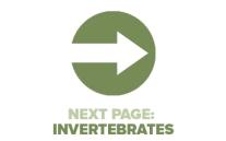 Next Page Invertebrates