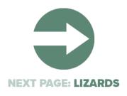 Next Page Lizards