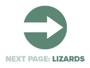 Next Page Lizards