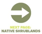 Next Page Native Shrublands