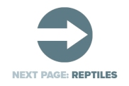 Next Page Reptiles