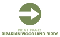 Next Page Riparian Woodland Birds