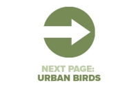 Next Page Urban Birds
