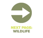 Next Page Wildlife
