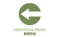 Previous Page Birds