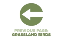 Previous Page Grassland Birds