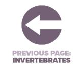 Previous Page Invertebrates