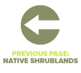 Previous Page Native Shrublands