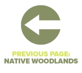 Previous Page Native Woodlands