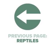 Previous Page Reptiles