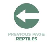 Previous Page Reptiles