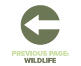 Previous Page Wildlife