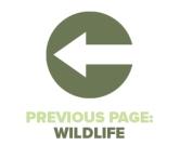 Previous Page Wildlife