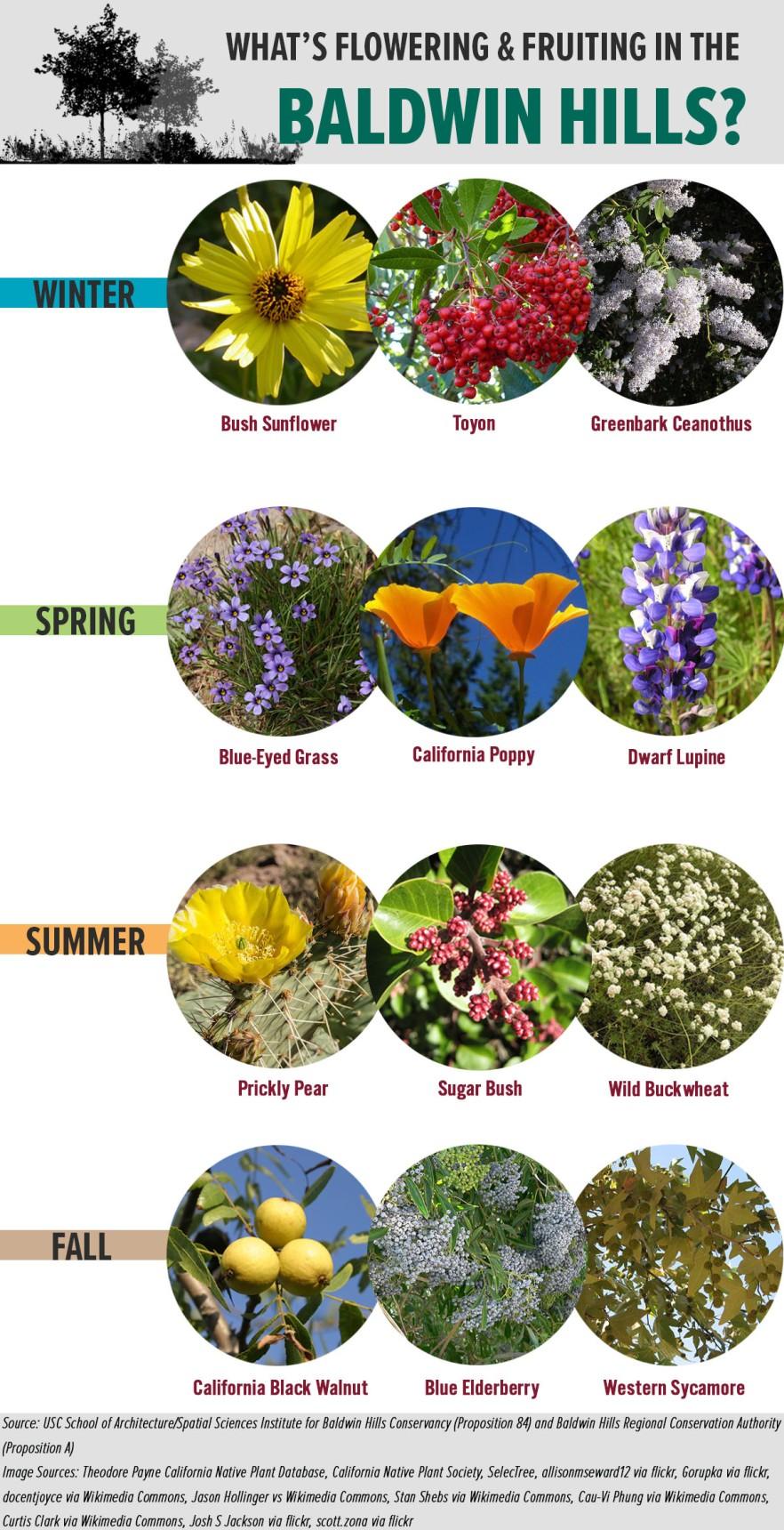 Vegetation_Seasonal_Infographic_8.18