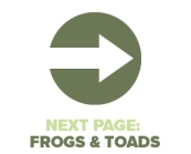 Next Page Frogs Toads