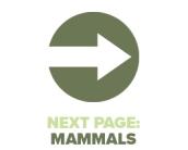 Next Page Mammals