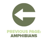 Previous Page Amphibians
